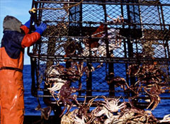 Alaska Crab - Northport Fisheries